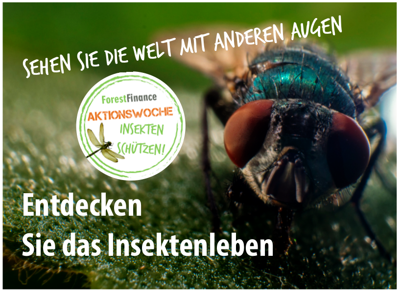 Klein, aber oho – 10 unglaubliche Fakten aus der Insektenwelt ...
