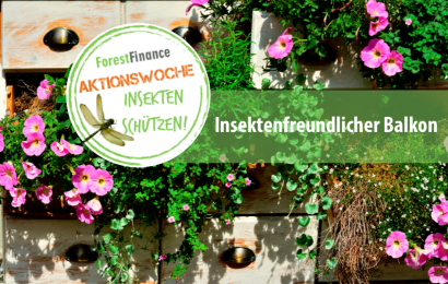 Insektenfreundlicher Start in die Balkonsaison