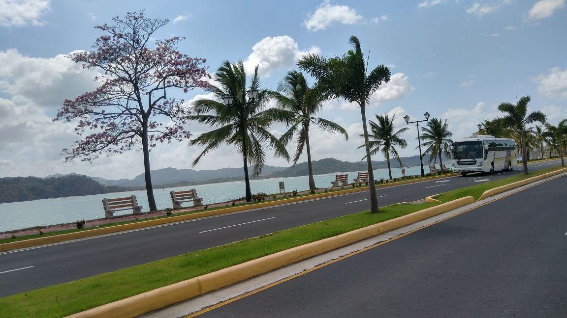 Carolina Meija hat einen rosa Vertreter seiner Art in Panama gefunden.