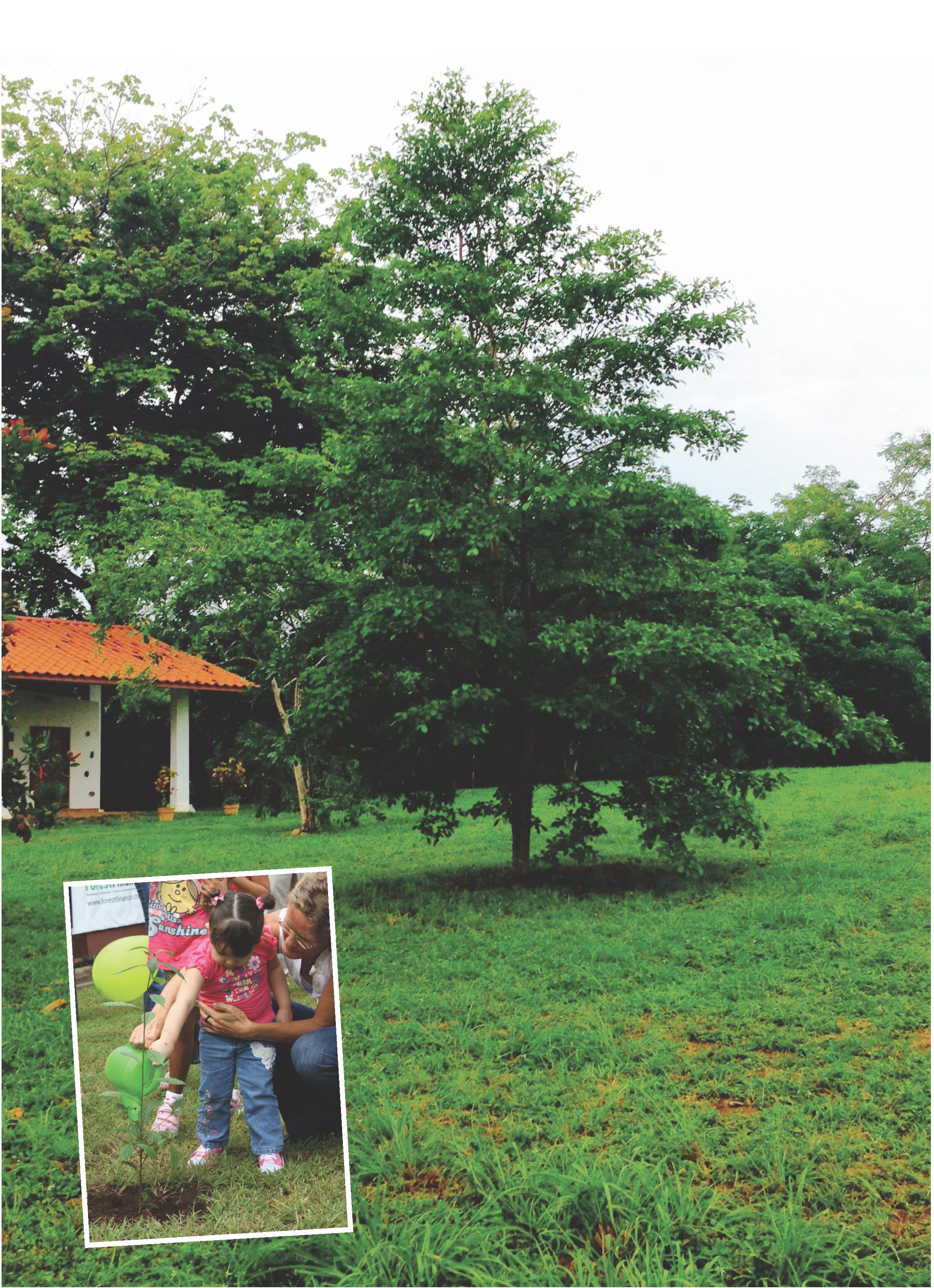 Der millionste Baum von ForestFinance in Panama.