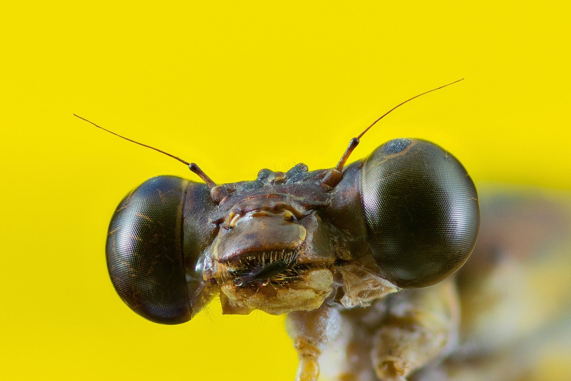 Ein Facettenauge von Libellen setzt sich aus 30.000 Augen zusammen. Foto: Pixabay/Josch13