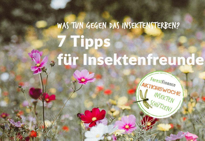 Unser Insektenhotel und weitere 6 Tipps für Insektenfreunde