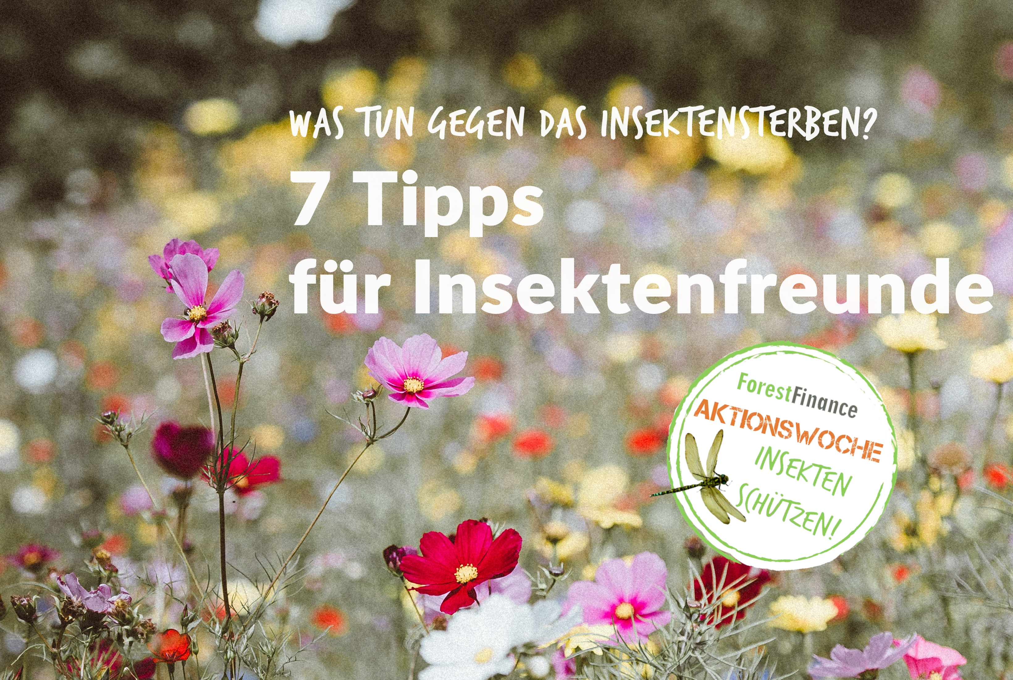 was tun gegen das insektensterben 7 tipps f r insektenfreunde forestfinance blog. Black Bedroom Furniture Sets. Home Design Ideas