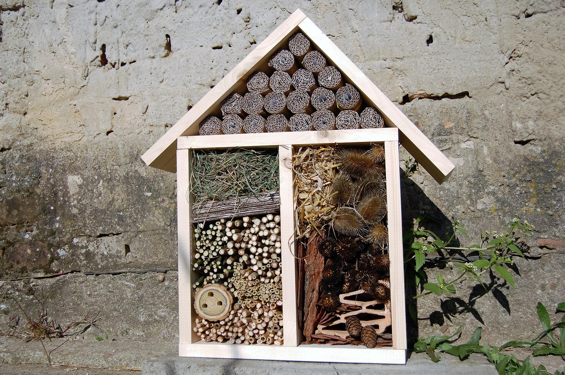 was tun gegen das insektensterben 7 tipps f r insektenfreunde forestfinance blog. Black Bedroom Furniture Sets. Home Design Ideas