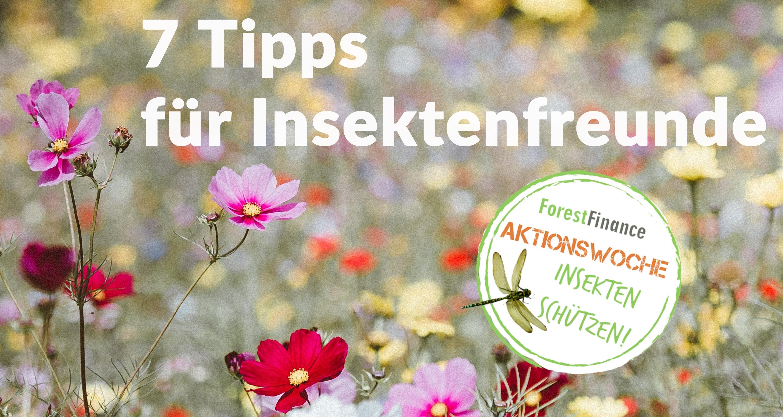 7 Tipps für Insektenfreunde