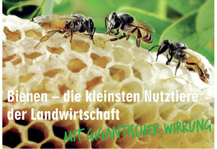 Das kleinste Nutztier: die Honigbiene