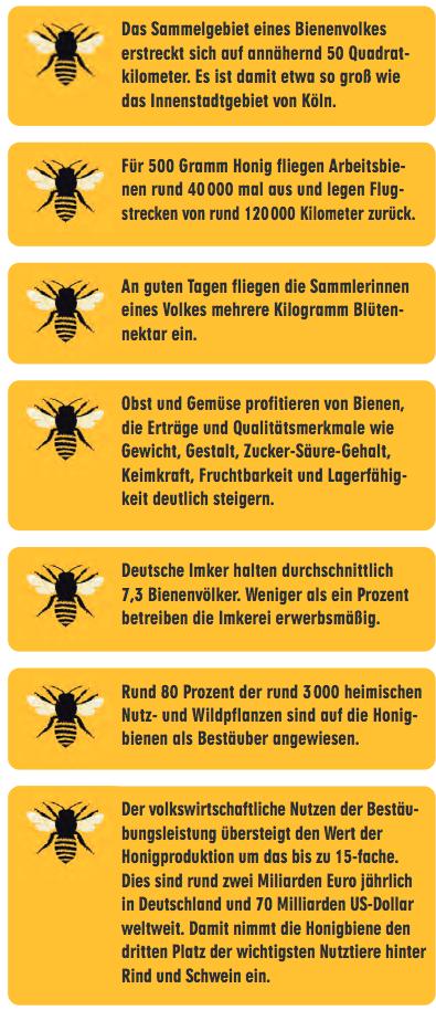 Quelle: www.deutscherimkerbund.de