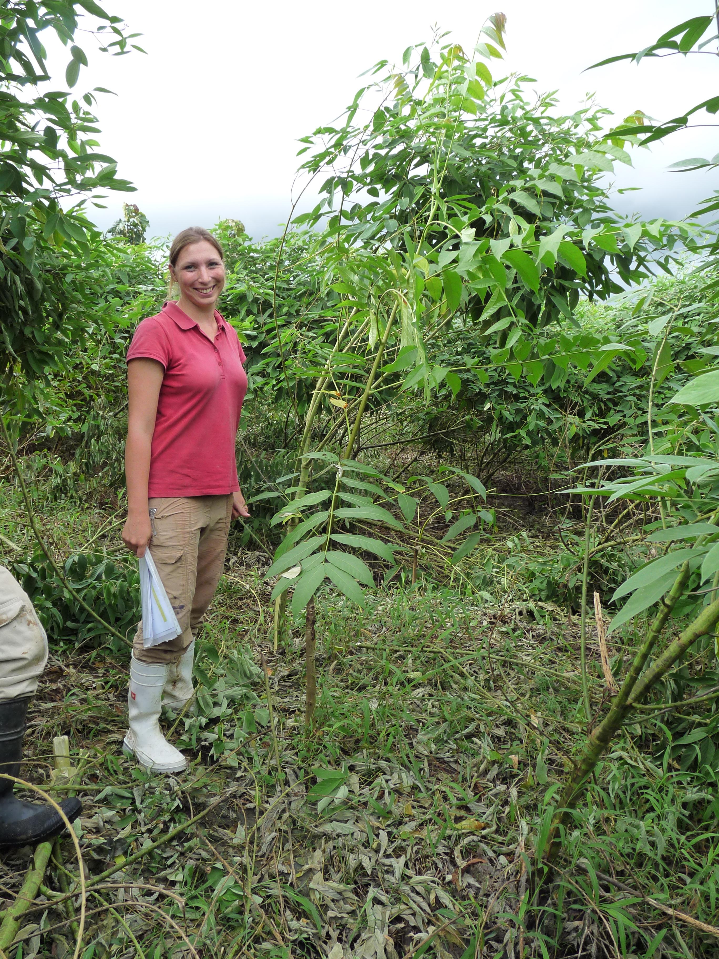 Die Forstwissenschaftlerin 2010 auf der ForestFinance-Finca Playa Chuzo, nahe Tortí. Auf dem Bild zu sehen ist – neben der Forscherin – ein junger Mahagonibaum, in dessen Umfeld sie Straucherbsen gepflanzt hat. Mit dem Wachstum der Pflanzen ist Carola Paul offensichtlich zufrieden. Foto: ForestFinance/Silke Berger