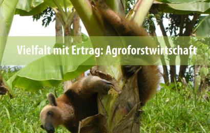 Vielfalt mit Ertrag: Agroforstwirtschaft
