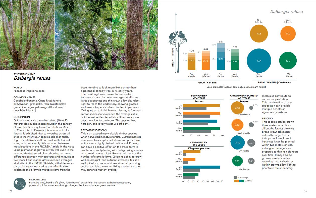 """Das Handbuch von Jefferson Hall und seinen Kollegen gibt übersichtlich Aufschluss über die Bedürfnisse in Panama heimischer Baumarten: hier Cocobolo, eine Baumart, die auch von ForestFinance gepflanzt wird. Quelle: Guide to early growth and survival in plantations of 64 tree species native to Panama and the Neotropics"""""""