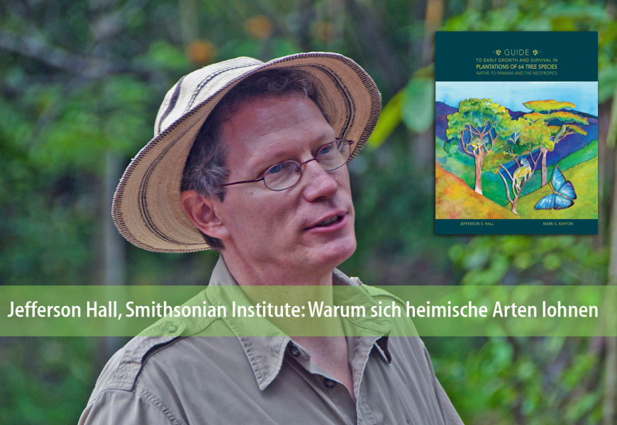Forschung bei ForestFinance: Warum sich heimische Arten lohnen