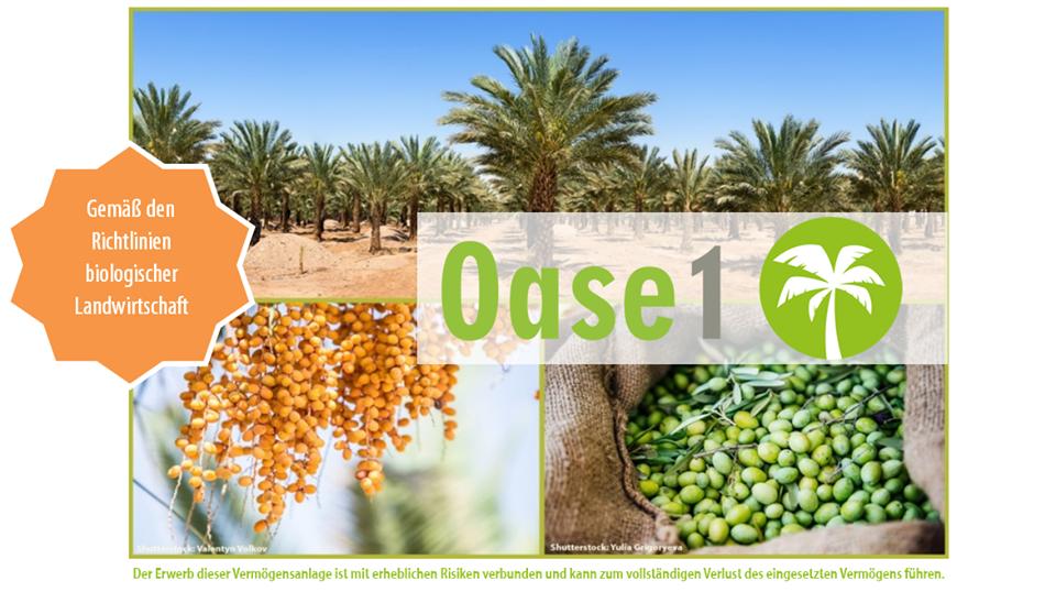 Mit dem neuesten Produkt von ForestFinance können Sie direkt in Bio-Datteln und -Oliven investieren.