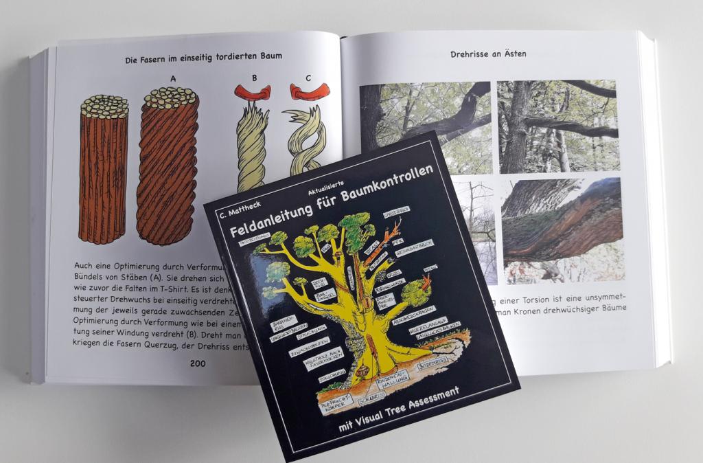"""Ist dieser Baum eine Gefahr oder kann er bleiben? Mit Hilfe der Bücher """"Die Körpersprache der Bäume"""" und """"Feldanleitung für Baumkontrollen"""" können Experten auch ohne den Baum anzubohren erkennen, wie es innen um ihn bestellt ist. Physikalische Prinzipien sind hier auch für Laien gut verständlich erklärt und nachvollziehbar. Foto: ForestFinance"""