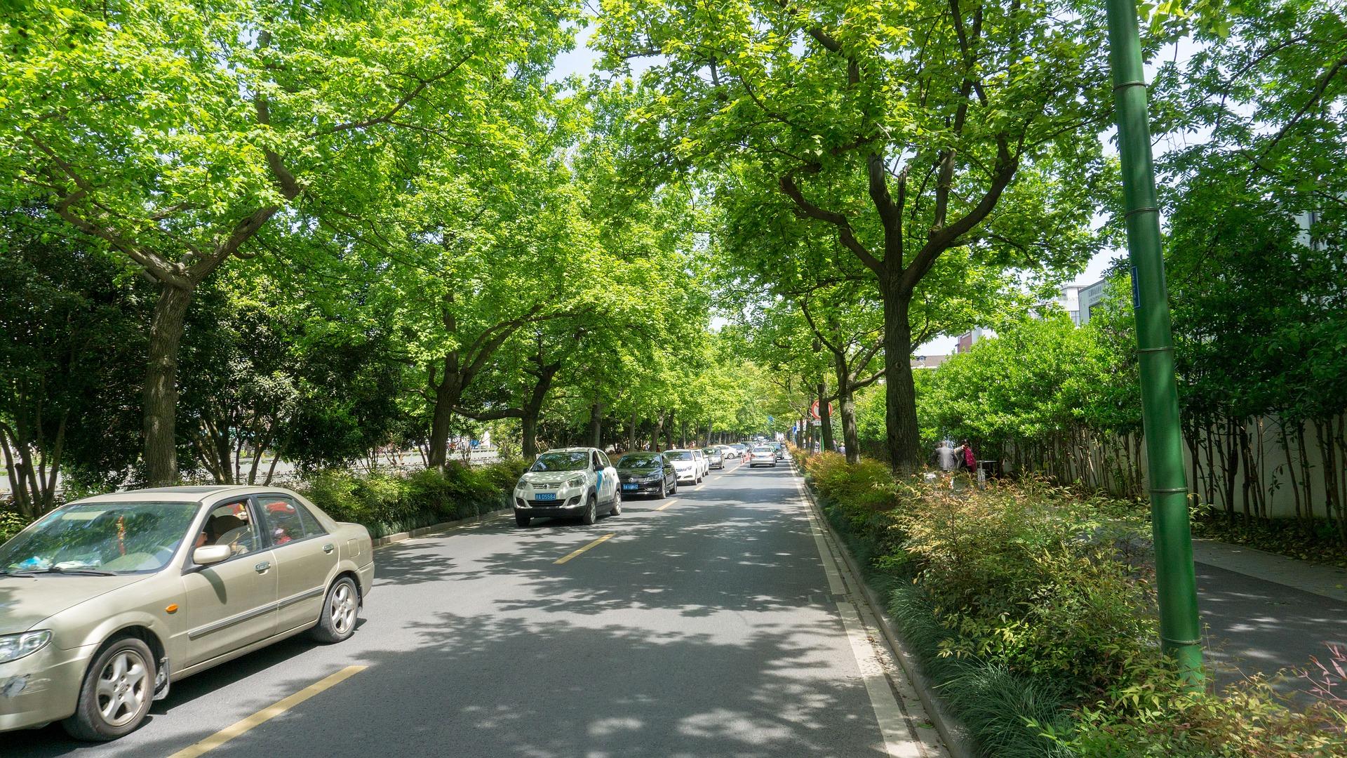 Straße mit Bäumen in der Stadt