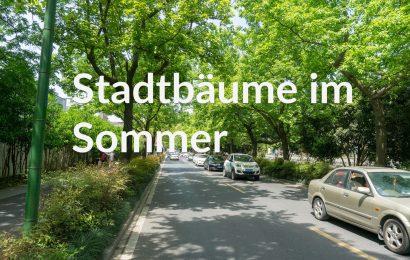 Stadtbäume im Sommer – Kühles Grün im Hitzestress