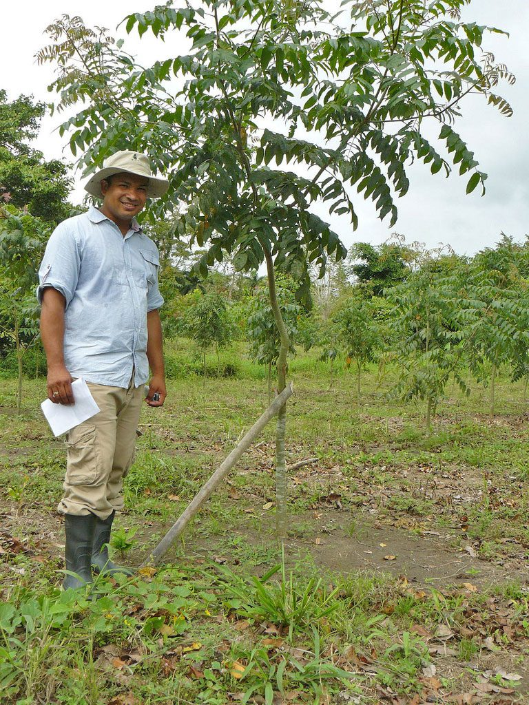 Pedro Garay. Foto: ForestFinance