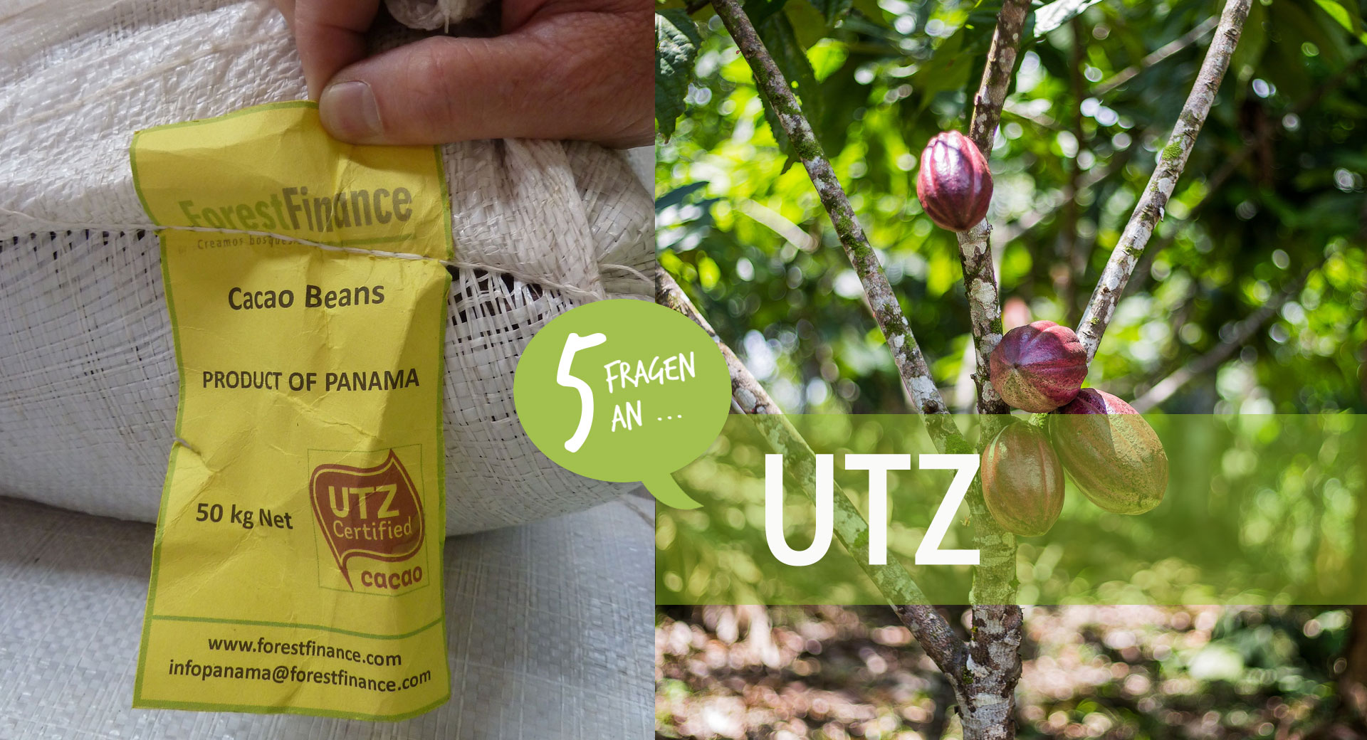 Der ForestFinance-Edelkakao aus Panama und Peru ist UTZ-zertifiziert. Foto: ForestFinance