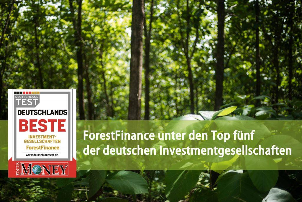 Links im Bild: Siegel von Focus Money. Text: ForestFinance unter den Top fünf der deutschen Investmentgesellschaften.