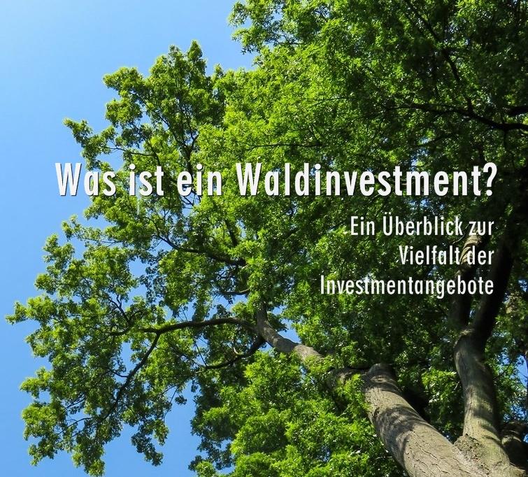 Nachhaltige Geldanlagen: Investieren In Wald