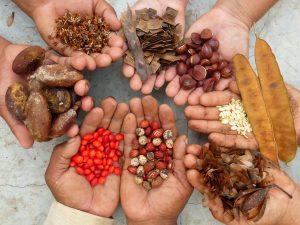 Samenvielfalt bedeutet Artenvielfalt