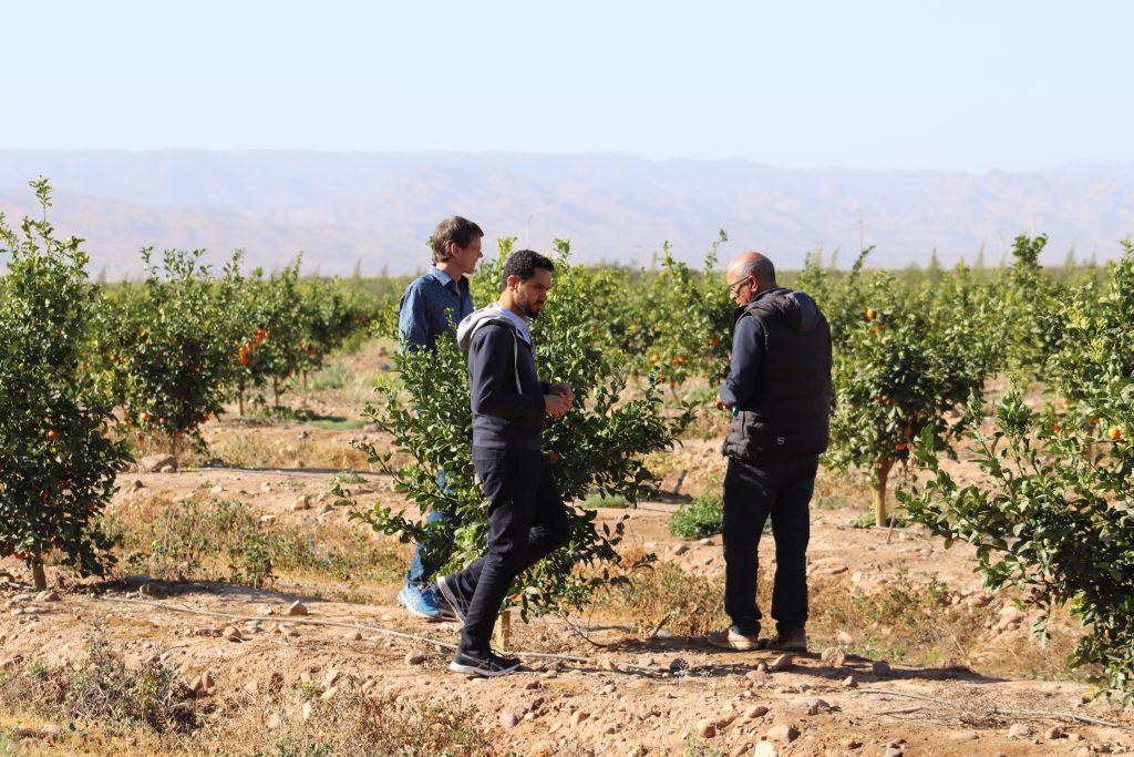Anas Bachar (Mitte) führt Besucher über Nachbarflächen des Oase-1-Projektes. Foto: DesertTimber