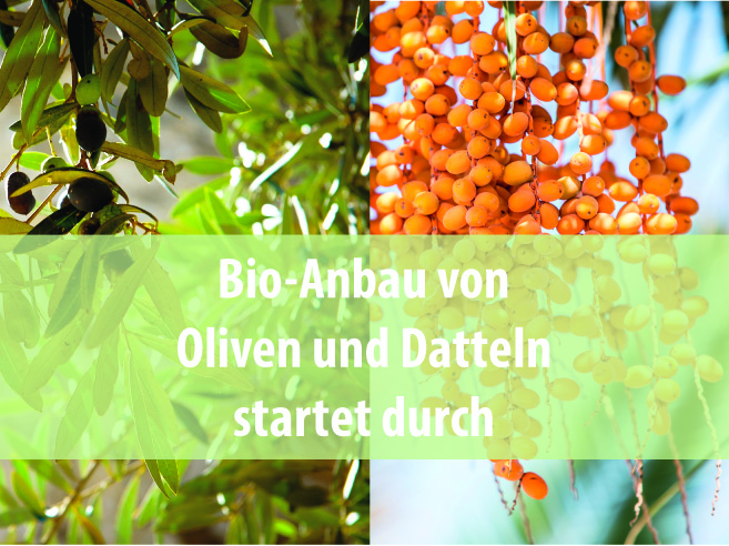 ForestFinance-Bio-Projekt in Marokko startet durch