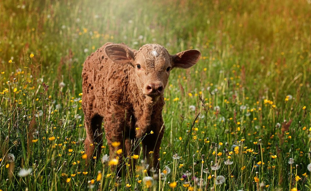 Mit BioBoden können Verbraucher deutschen Ökolandbau investieren.