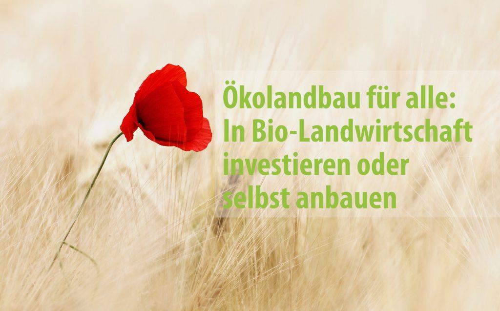 Ökolandbau für alle: In Bio-Landwirtschaft investieren
