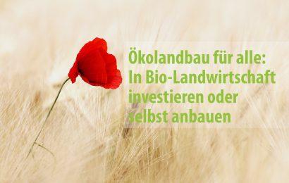In Ökolandbau investieren oder selbst anbauen: Bio-Landwirtschaft für alle
