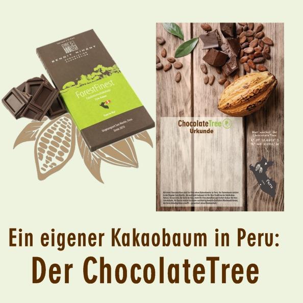 Baumpatenschaft Kakaobaum