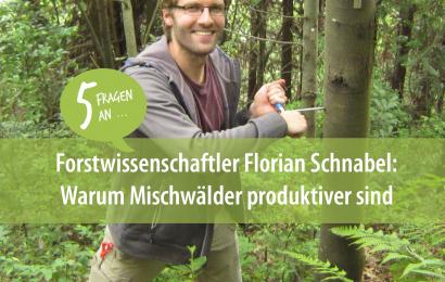 Wälder mit hoher Artenvielfalt sind produktiver: 5 Fragen an Forstwissenschaftler Florian Schnabel