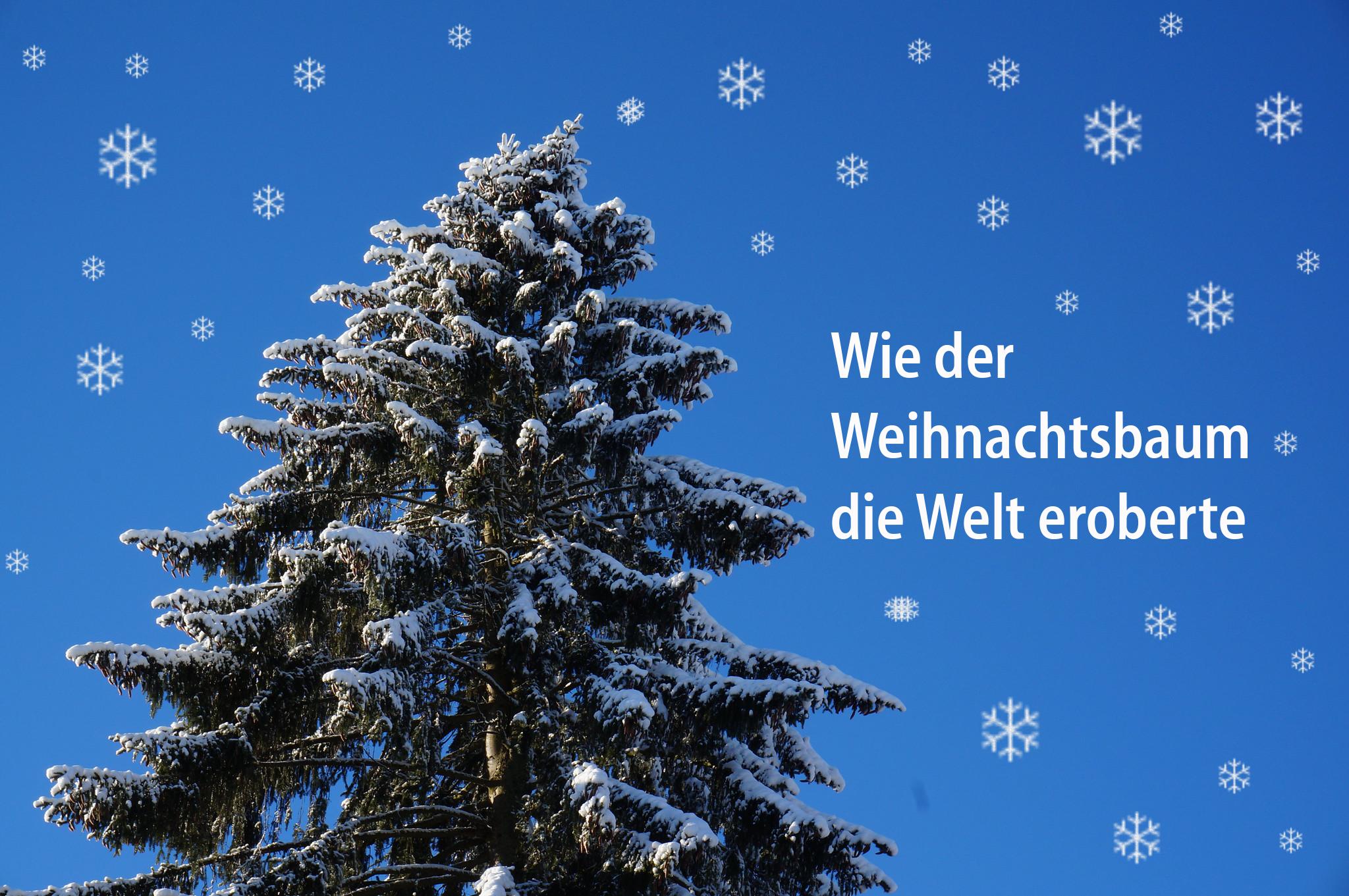Hündchenstellung der Deutschen im verschneiten Wald