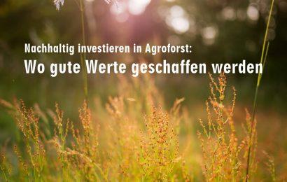 Nachhaltig investieren in Agroforst: Wo gute Werte geschaffen werden
