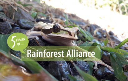 5 Fragen an: die Rainforest Alliance