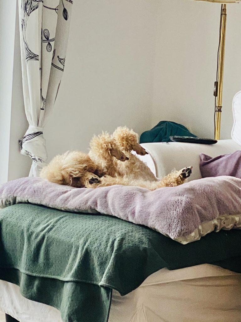 Wilma entspannt im Homeoffice