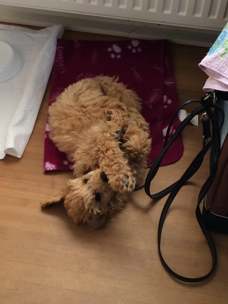 Büroschlaf ist für Wilma kein Problem