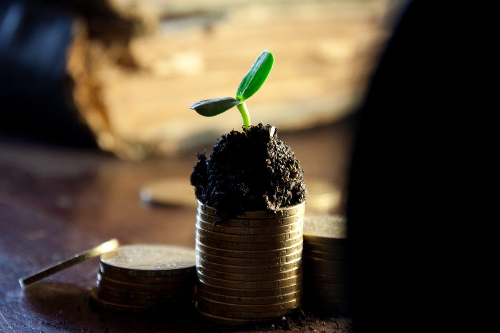 Münzen mit Setzling: Nachhaltige Geldanlagen auf dem Vormarsch