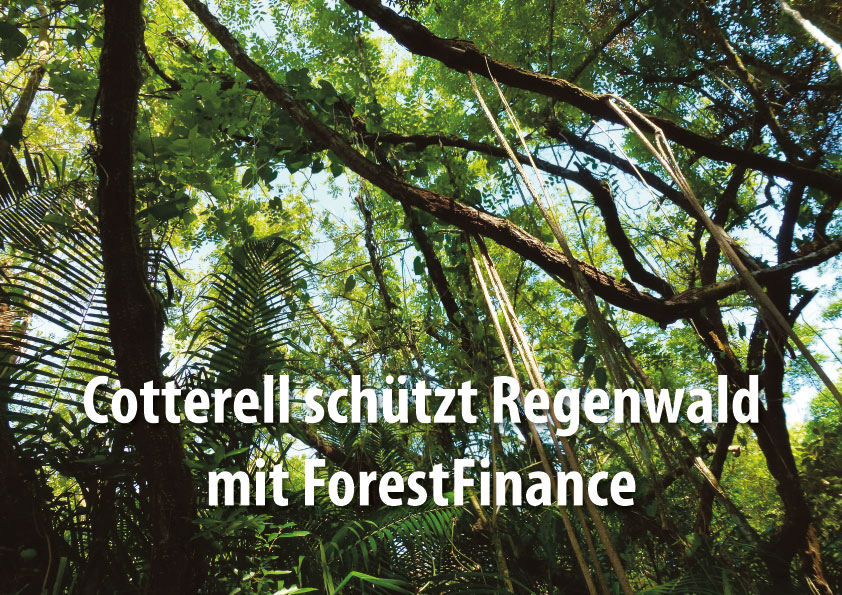 Cotterell schützt Regenwald mit ForestFinance