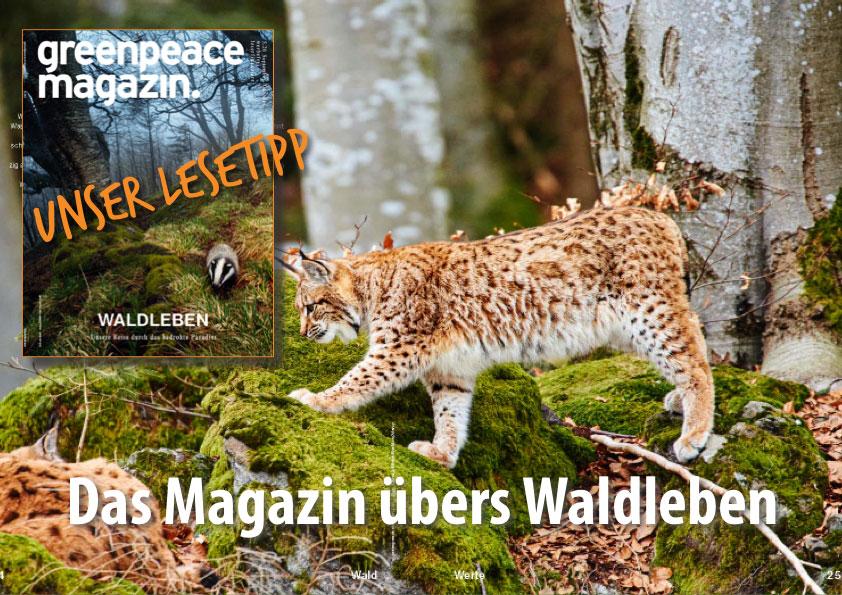 Das Greenpeace Magazin – übers Waldleben statt -sterben