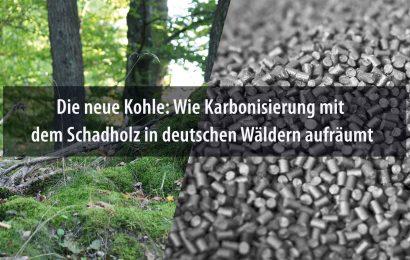 Die neue Kohle: Wie Karbonisierung mit dem Schadholz in deutschen Wäldern aufräumt