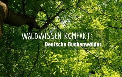 Waldwissen kompakt: Deutsche Buchenwälder