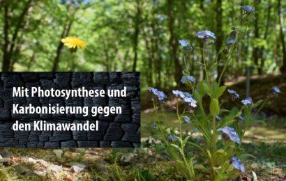 Mit Photosynthese und Karbonisierung gegen den Klimawandel