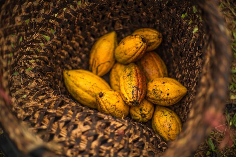 Kakao mit (Welt)Klasse