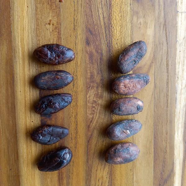 Kakaobohnen mit und ohne Röstung.