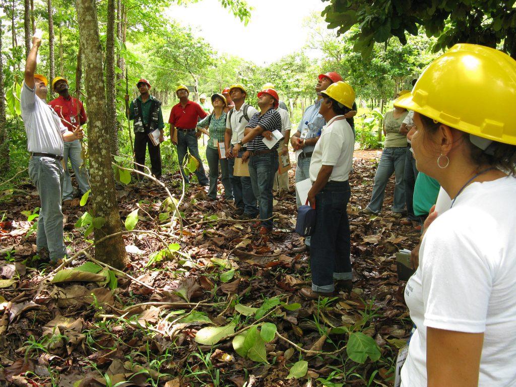 MitarbeiterInnen bei einer Fortbildung im Wald, Panama